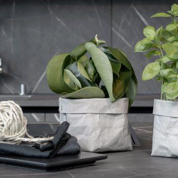 bag grau pflanze